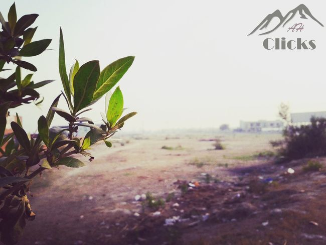 Adapted To The City Plant Leaf Nature Growth Sky Outdoors Close-up Day No People Social Issues Tree Sunbeam Beauty In Nature Citylife😄 With Friends Randomclicks📷 Betterlandscapes