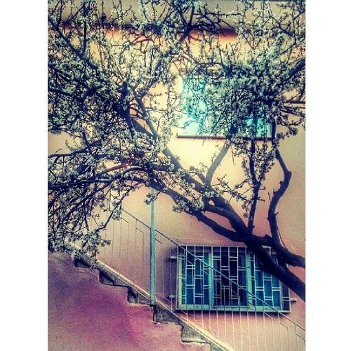 Spring Bahar Uşak 64 esme vscocam vsco altinvizor ig_istanbul ig_izmir insta_ankara ig_captures mycapture photooftheday photoplatonic photosynapse photo_turkey fotograf_atolyesi awardsturk heulmsl