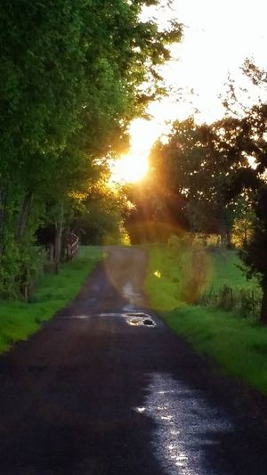 The walk home. Tree Nature No People Wet Growth Beauty In Nature Green Color The Way Forward Outdoors Sunbeam Scenics Grass Day Water Walk Home. Beauty In Nature Home