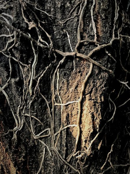 Beauty In Nature Backgrounds Textured  Nature Tree Pattern Close-up Full Frame Abstract No People Outdoors Knotted Wood Day Root Of A Tree Tree_collection  Tree And Roots Root Of Orchid