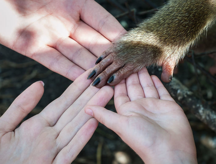 Close-Up Of People And Monkey Holding Hands