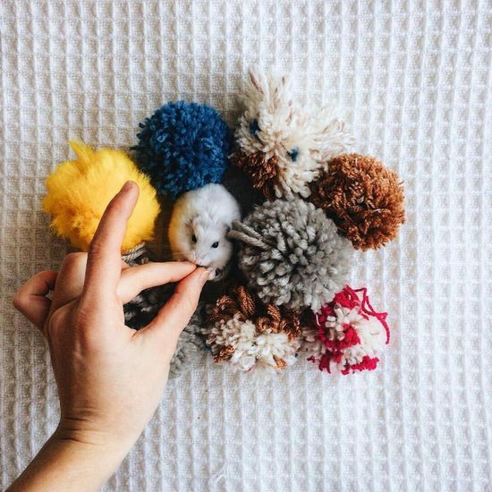 Cropped image of person feeding mouse by wool on table