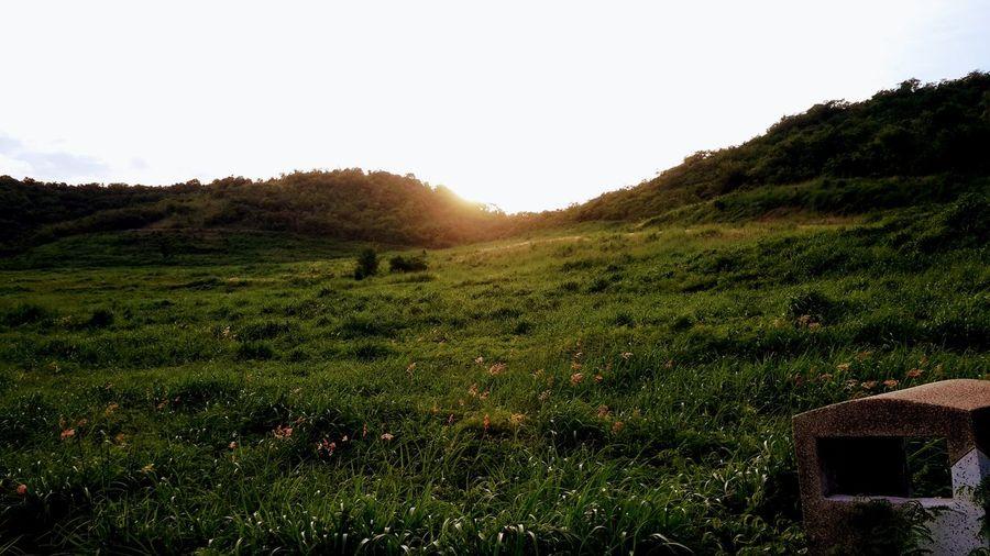 #Nature  #photography #landscape #nature #photography #flower#garden#nature#ecuador#santodomingoecuador#eyeEmfollowers#iphoneonly#nofiltrer#macro_garden#pretty#beautiful#followme#sho #beautiful #travel #throwback #sunset #mountain Tea Crop Rural Scene Agriculture Tree Field Grass Landscape Green Color