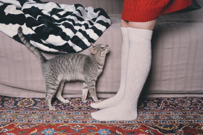 One Woman Only From Where I Stand Sock Feeding Animals Cat Four Legs And A Tail TK Maxx Socksie I Love My Cat Kitty Human Leg ThatsMe Self Portrait Fresh On Market 2016