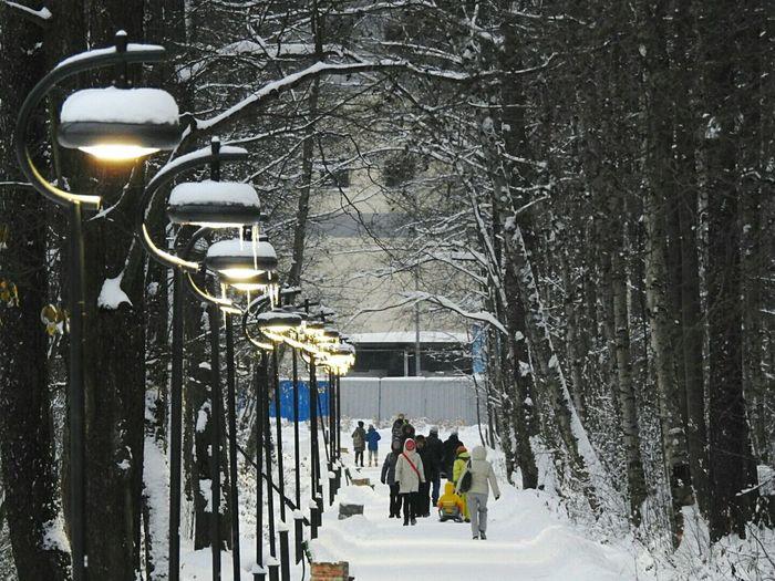 Winter Park Udelnii Cold Temperature Colors Of Sankt-Peterburg Sankt-Petersburg Russia