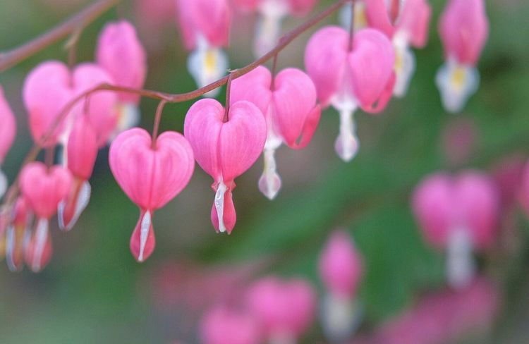 Its a broken heart Flower Pink Color Fragility Petal Beauty In Nature Growth Nature Freshness Flower Head Focus On Foreground Blooming No People Close-up Plant Outdoors Day Tree