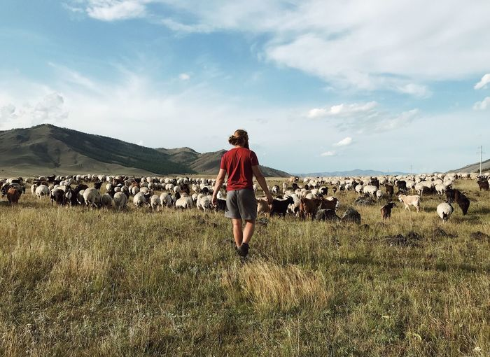 Rear view of man walking on land by goats