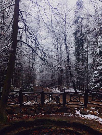 Świętokrzyskie Świętokrzyski Mountain Winter Forest Walking Alone...