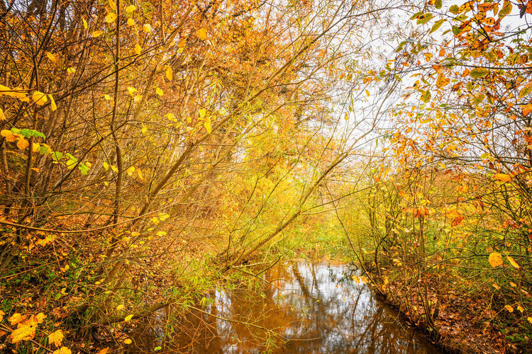 Plants and trees by lake in forest during autumn