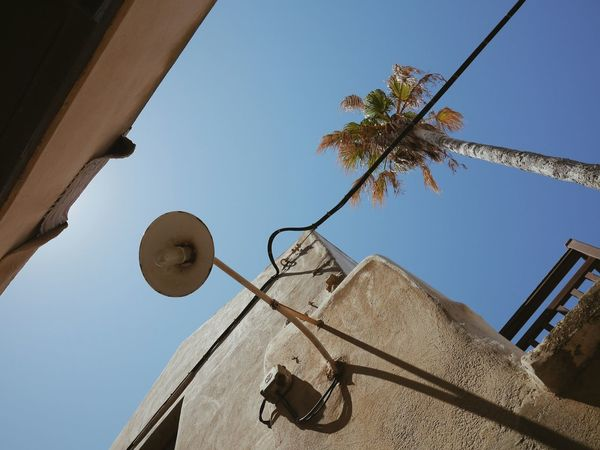 Creative Light And ShadowRule Of Thirds Lookingup Blue Sky biggest Palmtree in oldtown