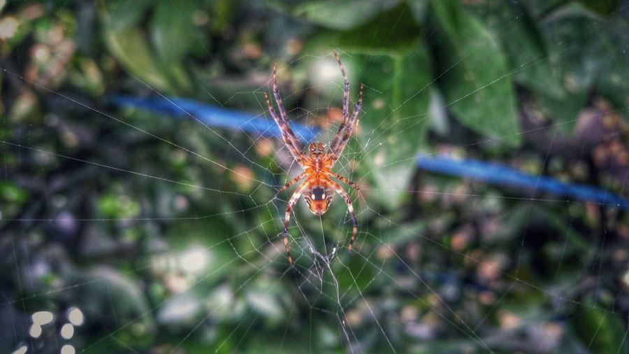 Spider Spider Web Spoderman Spiderworld Spideronwork Spider Silk Spider's Web Nepal #travel My_nepal_my_pride Eyeem Nepal Nepal Nature Photography Mobile Photography Samsung Galaxy S5