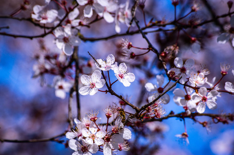 EyeEm Best Shots EyeEm Nature Lover EyeEmBestPics EyeEm Best Shots - Nature Wonders Of Nature Tree Flower Branch Springtime Beauty Flower Head Blossom Sky Close-up In Bloom Twig Botany Plant Life Pistil Stamen