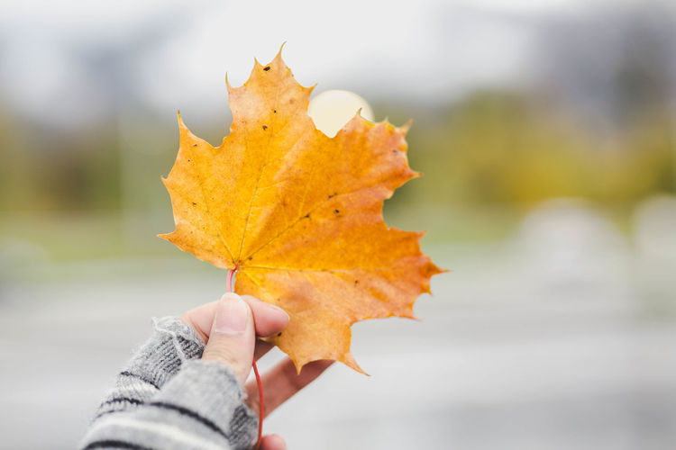 Winter is coming. Autumn Human Hand Hand One Person Holding Plant Part Leaf Human Body Part Change Unrecognizable Person Focus On Foreground Close-up Nature Real People Finger Human Finger Body Part Day Personal Perspective Lifestyles Maple Leaf Outdoors Autumn Collection Human Limb Leaves