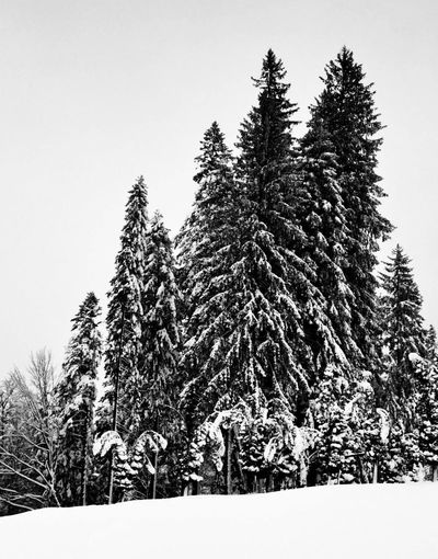 Soon... Winter, Black And White