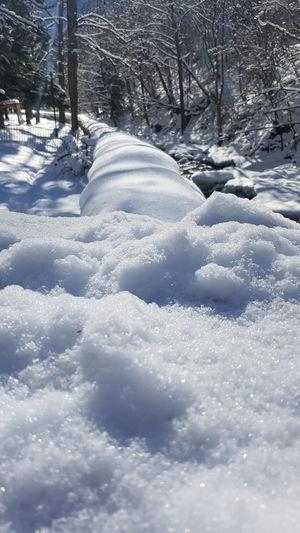 Cold Temperature Winter Snow Close-up Georgia Winter Nature Beauty In Nature