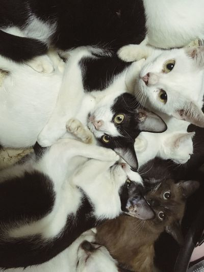cats! Cat Animal Themes Mammal Animal Pets Domestic One Animal Domestic Animals Vertebrate Canine Relaxation High Angle View Indoors  Portrait Home Interior No People Looking At Camera Furniture