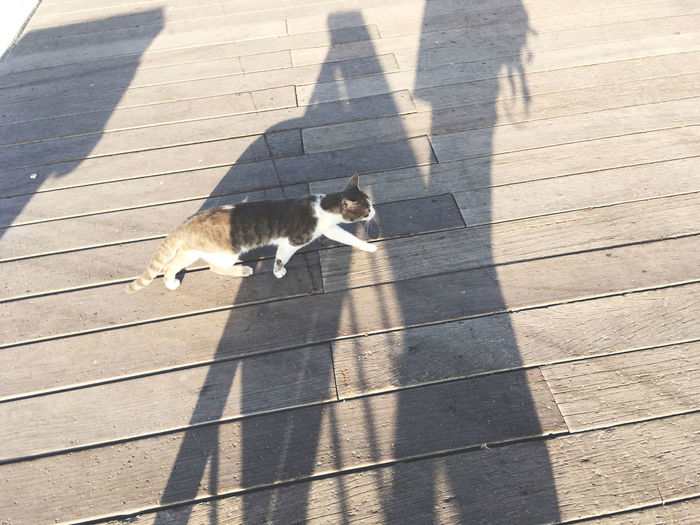 High angle view of cat shadow on footpath