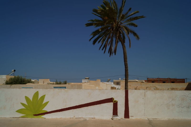 Palm resistance Alone Architecture Beauty In Nature Blue And Green Blue Sky Broken Broken Patterns Clear Sky Day Djerba  Funny Graffiti Leaves No People Outdoors Palm Tree Palm Tree Roof Rooftops Street Art/Graffiti Street Photography Tree Trunck Wall Wall - Building Feature