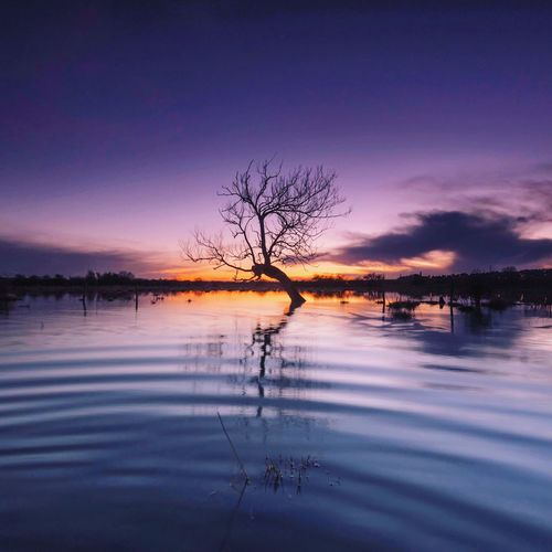 Silhouette bare tree by lake against sky at sunset
