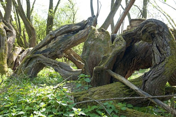 Beauty In Nature Branch Forest Nature Outdoors Tree Tree Trunk Wood - Material