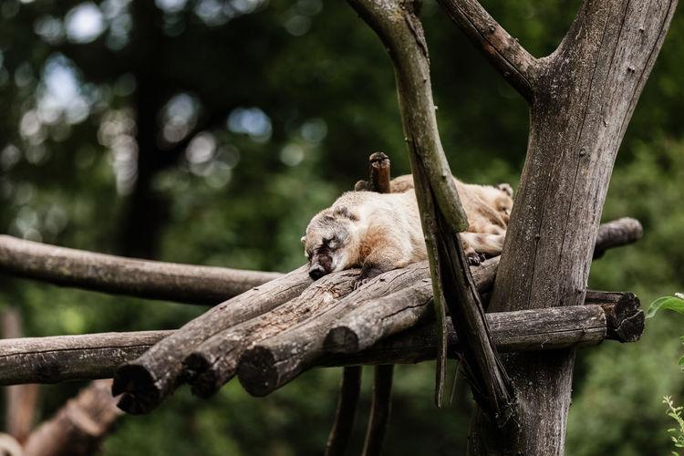 View of an animal sleeping on tree