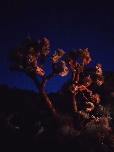 Low angle view of flowering tree against sky at night