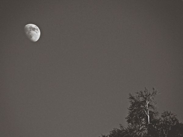 Daytime Moon Simplicity Capa Filter Black & White