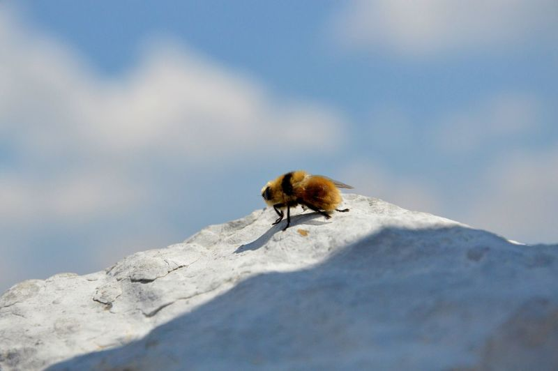 Close-up of bee on rock