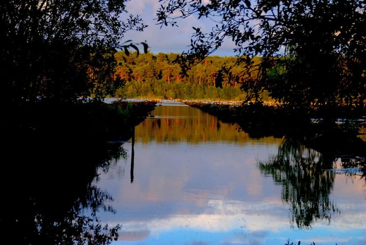 Water Reflections Forrest Delamere Refelections Nature Nature_collection Nikonphotography