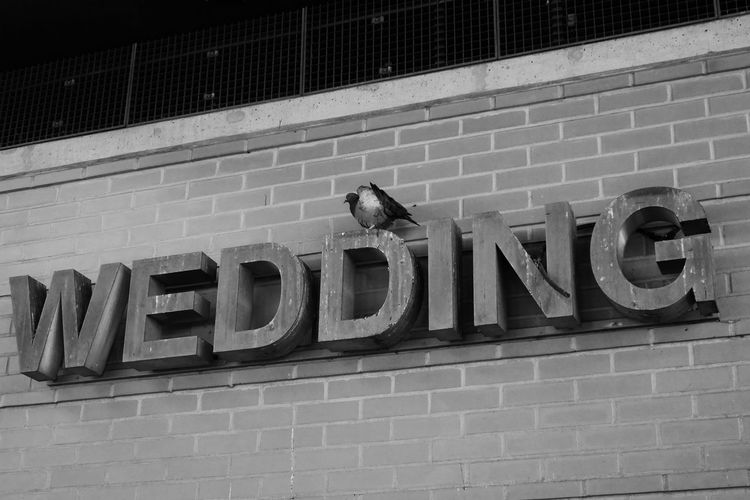 Architecture Berlin Berlin-Wedding Blsckandwhite Brick Wall Building Exterior Built Structure Capital Letter Communication Day Dove Doves, Birds Low Angle View No People Outdoors Police Station S-Bahn Berlin Single Word Taube Text Wall Wedding Western Script