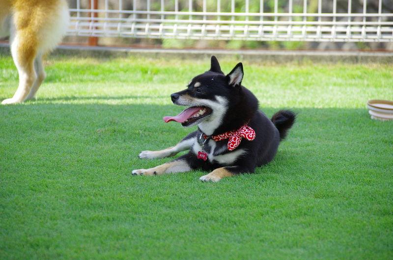 Pets Canine Dog