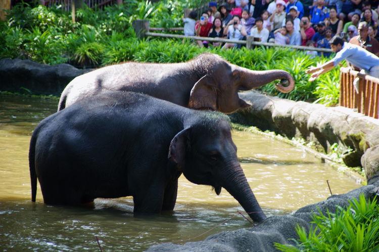 elephants Water
