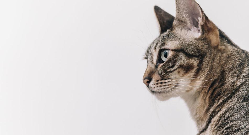 Cats Cat Cat