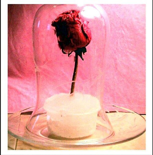 """""""Flower Hourglass"""" Beautyandthebeast Beauty&thebeast Flowerporn Flower Fantasy Fantasy Artistic Expression Artofvisuals Art?"""