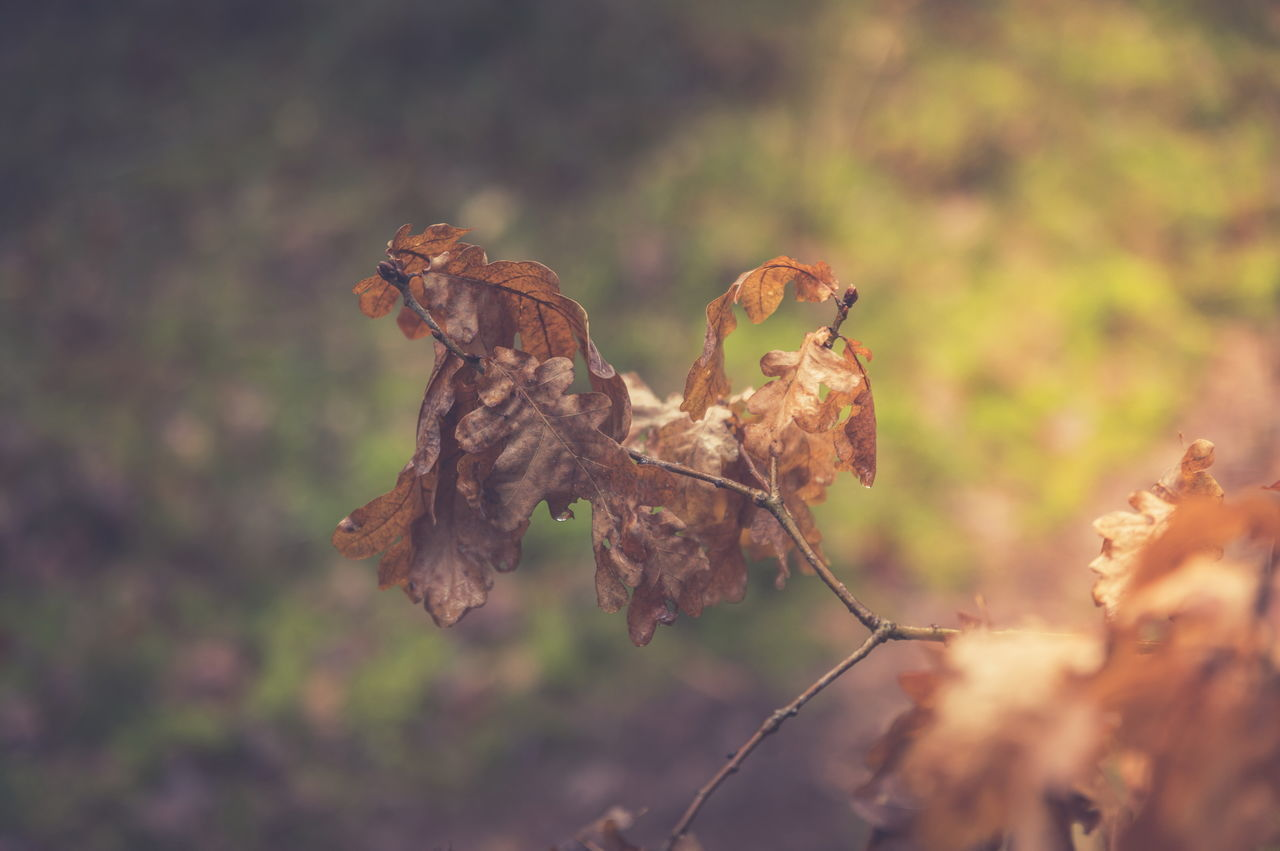 focus on foreground, dry, close-up, plant, no people, nature, day, fragility, vulnerability, brown, beauty in nature, growth, leaf, plant part, selective focus, tranquility, outdoors, dried plant, wilted plant, dead plant, leaves, dried