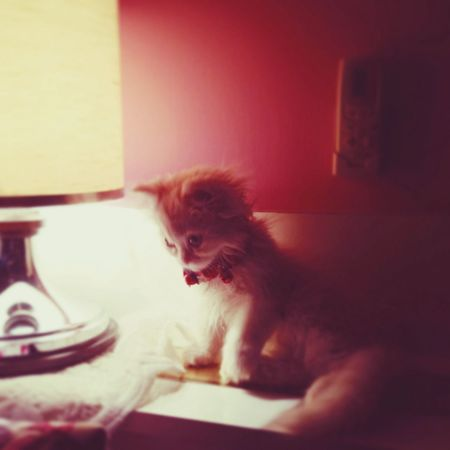 The Illuminator - 2014 EyeEm Awards cat , shadow , chico my boy