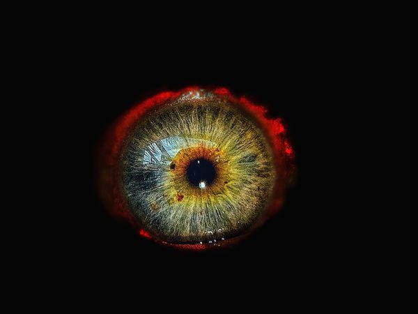 My Eye!!! Mein Auge!!! EyeEm Selects Eye Eyes Eyesight Auge Augen Iris - Eye Iris Black Background Studio Shot Close-up