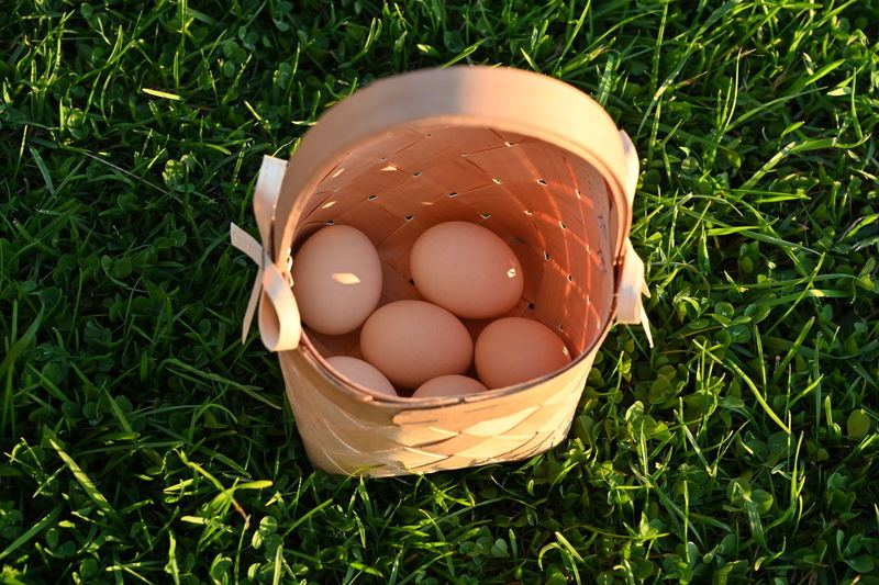 High angle view of eggs in field