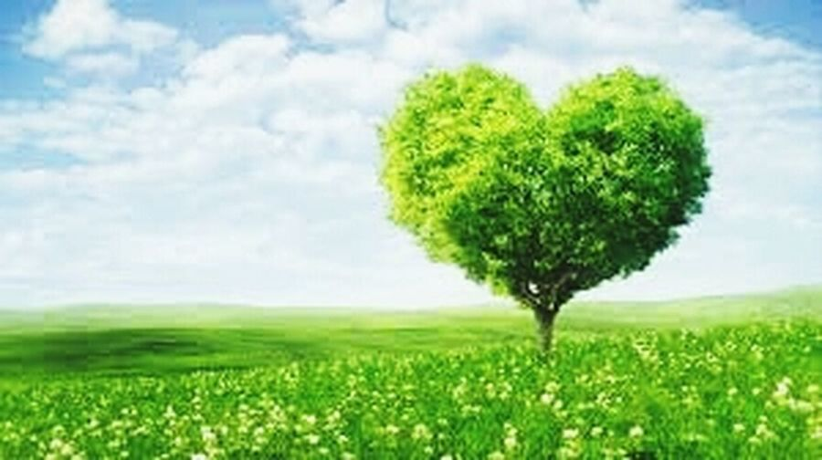 HERZens grüner Baum