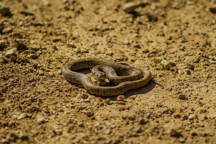 High angle view of snake on land