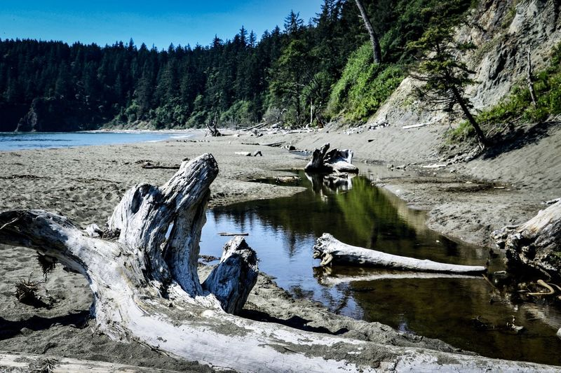 Water Tree Scenics - Nature Beauty In Nature Nature Lake Tranquility Land Idyllic Outdoors Driftwood Beach Beachphotography Nature Nature_collection