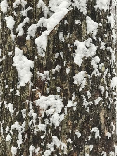 Winter Snow Cold Temperature Weather Nature Covering Beauty In Nature Tree Trunk Close-up Trree Full Frame Background