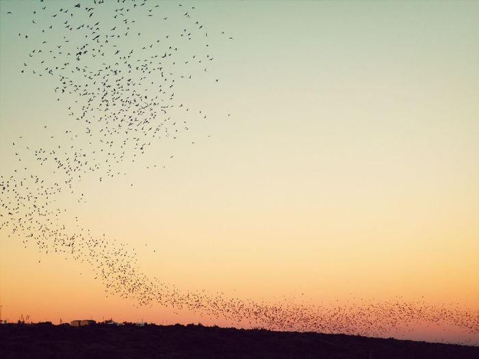 Sunset Rush Hour Carlsbad Bats