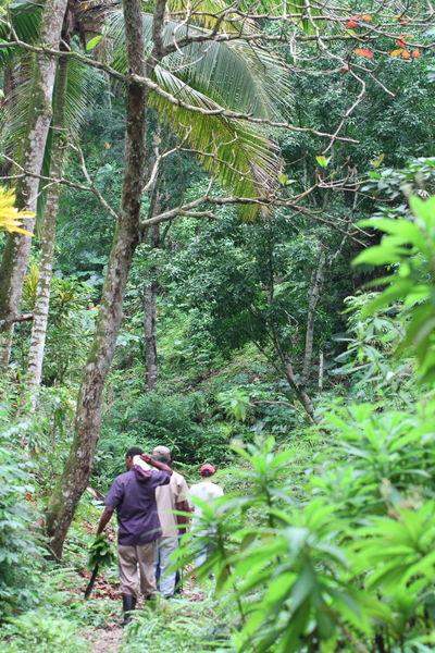 Hike close to Ocho Rios (Jamaica) Natural Nature Ocho Rios Jamaica Tropical Forest West Indies Bush Caribbean Forest Hike Jamaica Trail