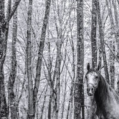 Horse Forest Nature