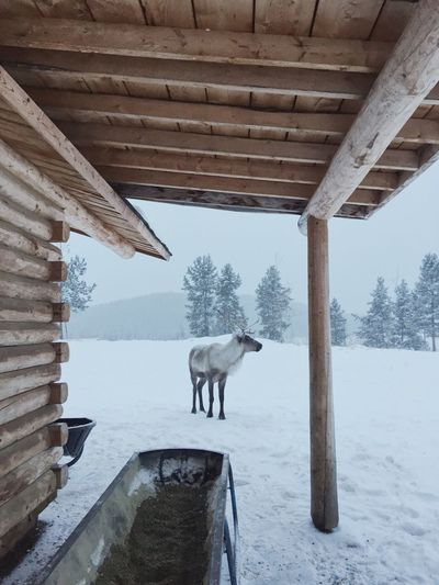 View of a horse standing in snow