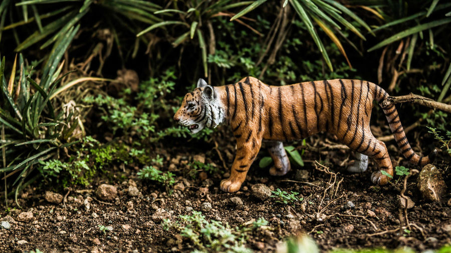 Tiger walking in a field -- toys photo