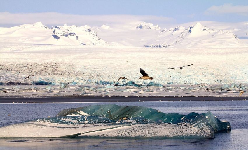 Birds Flying Over River During Winter