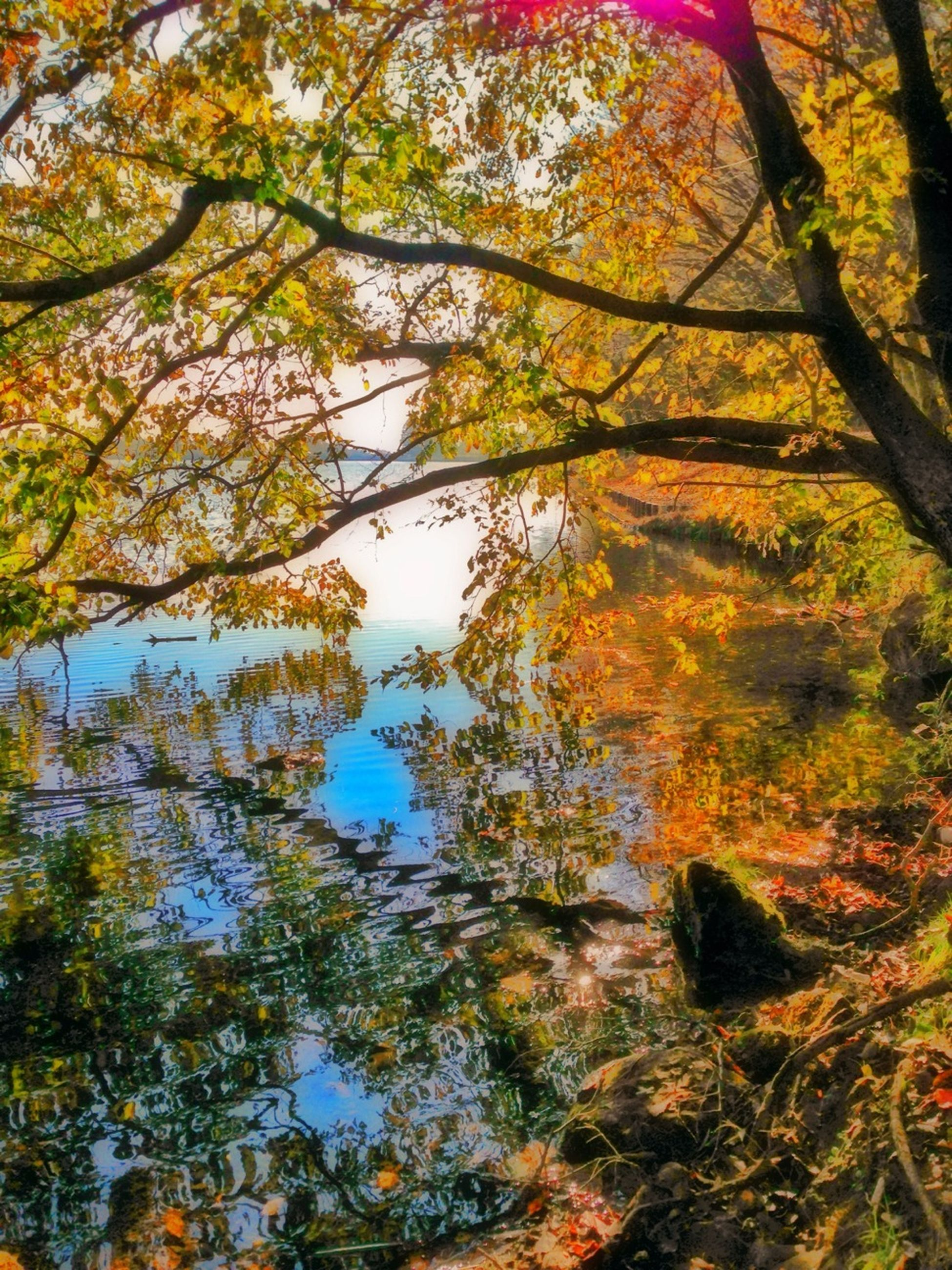 tree, autumn, tranquility, branch, beauty in nature, change, nature, growth, tranquil scene, scenics, forest, tree trunk, low angle view, season, idyllic, day, leaf, no people, outdoors, sunlight