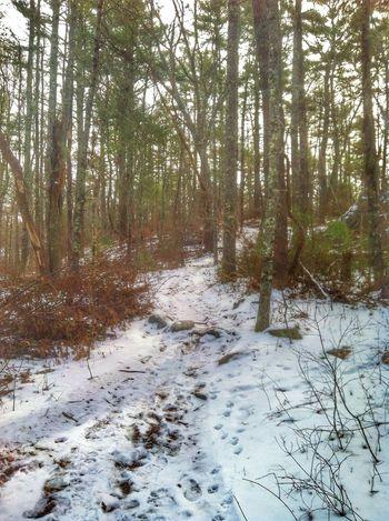 Chosen Paths Hiking February Beautiful Nature